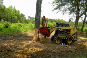 tree-thinning-and-removal-columbia-south-carolina