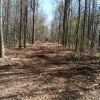 Carolina Brush Cutters, Columbia SC, 803-237-2324
